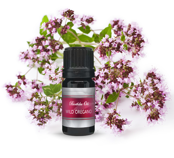 Wild Oregano Therapeutic Quality Essential Oil